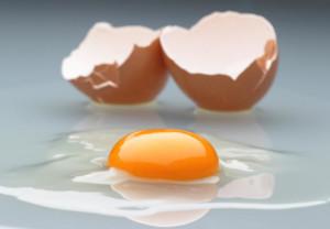 Alimentazione: albume d'uovo